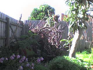 brunswick_backyard_0001.jpg