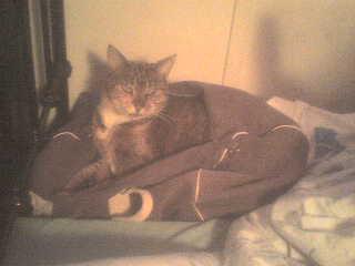 cat_in_a_bag_0001.jpg